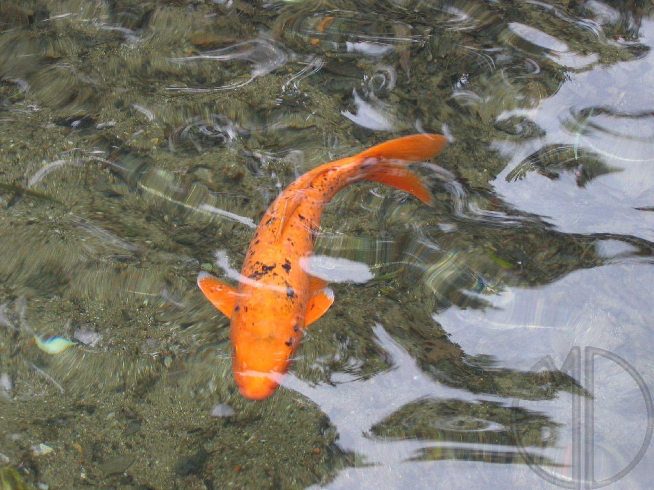 Photo poisson 01